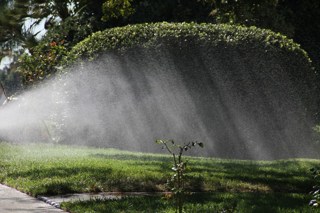 Sprinkler in sunlight